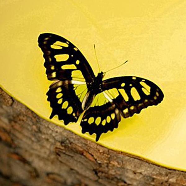 butterfly-house-lancaster-photos-ashton-memorial-photographer-wedding-photography-butterflies.jpg