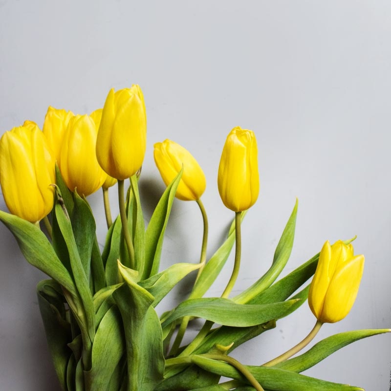 yellow flowers on grey background